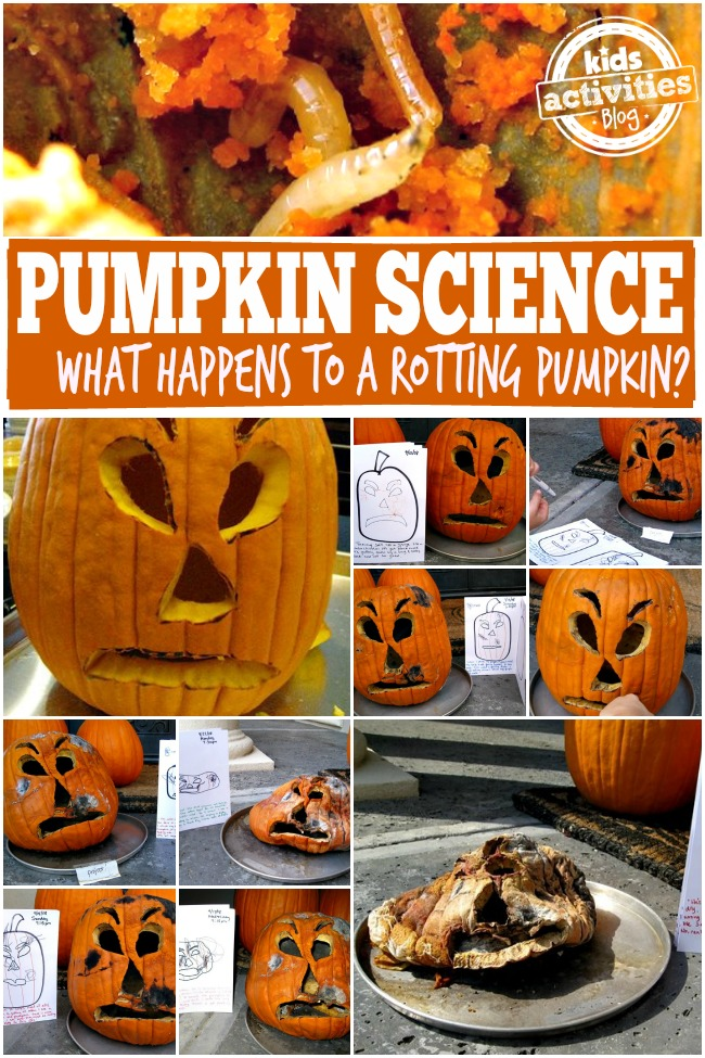Pumpkin-Science-What-Happens-to-a-Rotting-Pumpkin